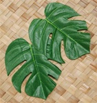 POLYSILK MONSTERA LEAVES/12
