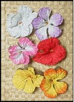 SINGLE LARGE HIBISCUS HAIR CLIP - SALE