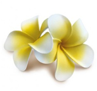 WHITE & YELLOW FOAM DOUBLE PLUMERIA FLOWER CLIP
