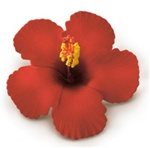RED FOAM HIBISCUS  CLIP