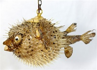 "SPINY BLOWFISH LIGHT / LARGE - 15""-18"""